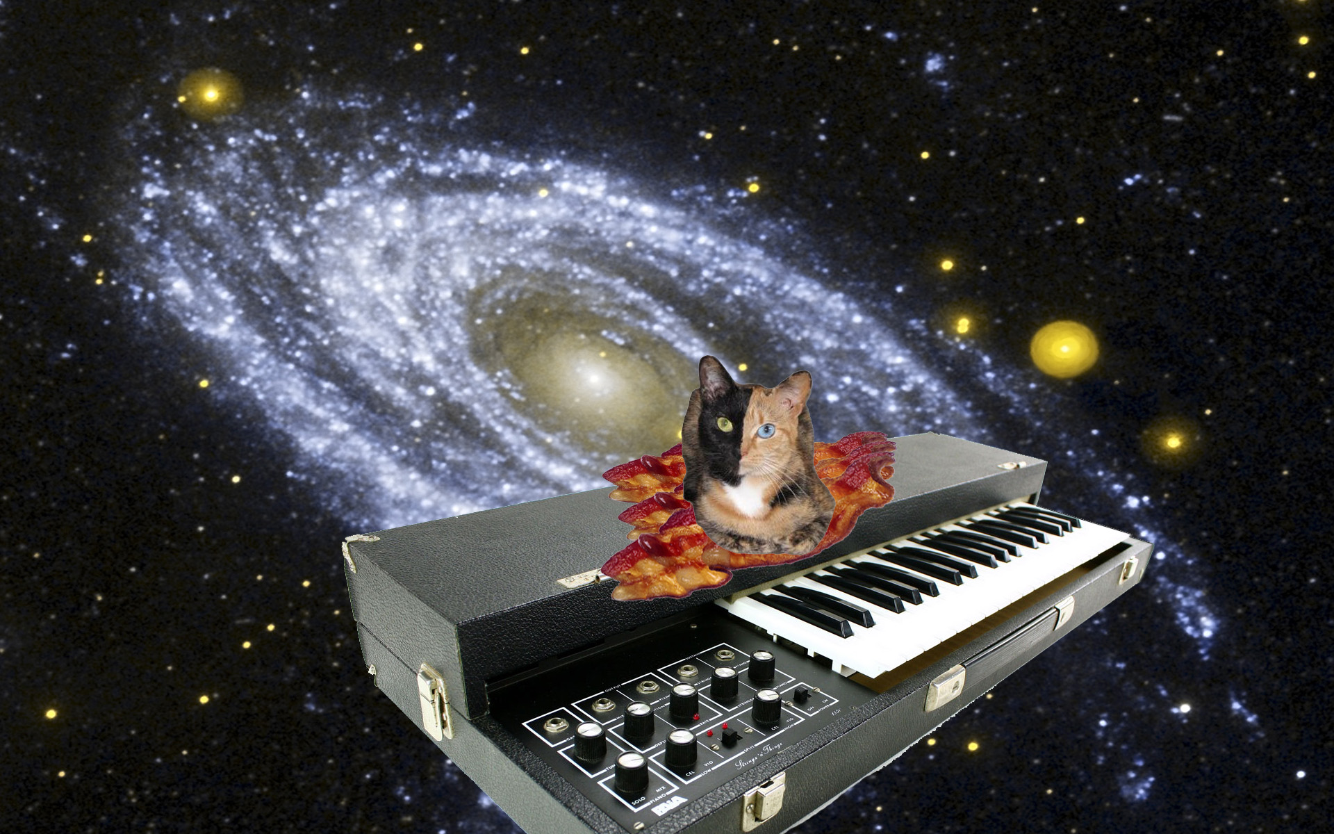 Cats in Space Wallpaper Images Pictures   Findpik 1920x1200