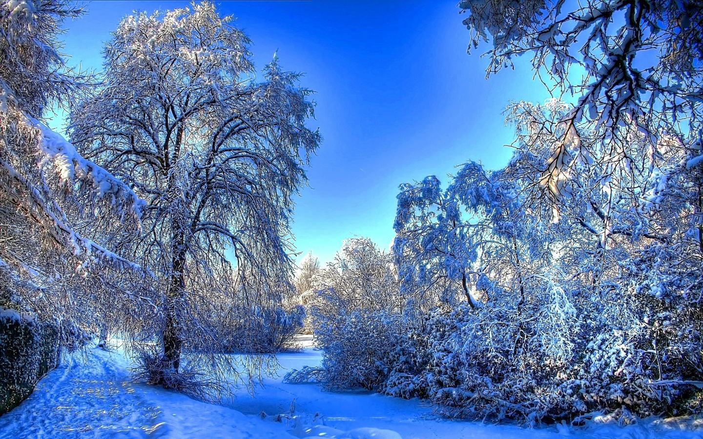 Backgrounds   Winter snow branches Wallpaper 1440x900 Widescreen 1440x900