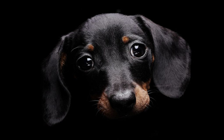 Cute black dog wallpaper high resolution of cute black dog wallpaper 1440x900