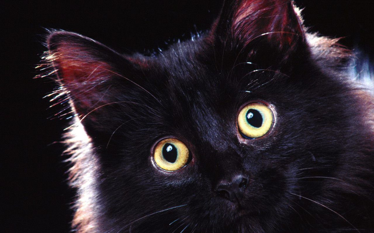 comclubscatsimages16155539titlebeautiful black cat 3 wallpaper 1280x800