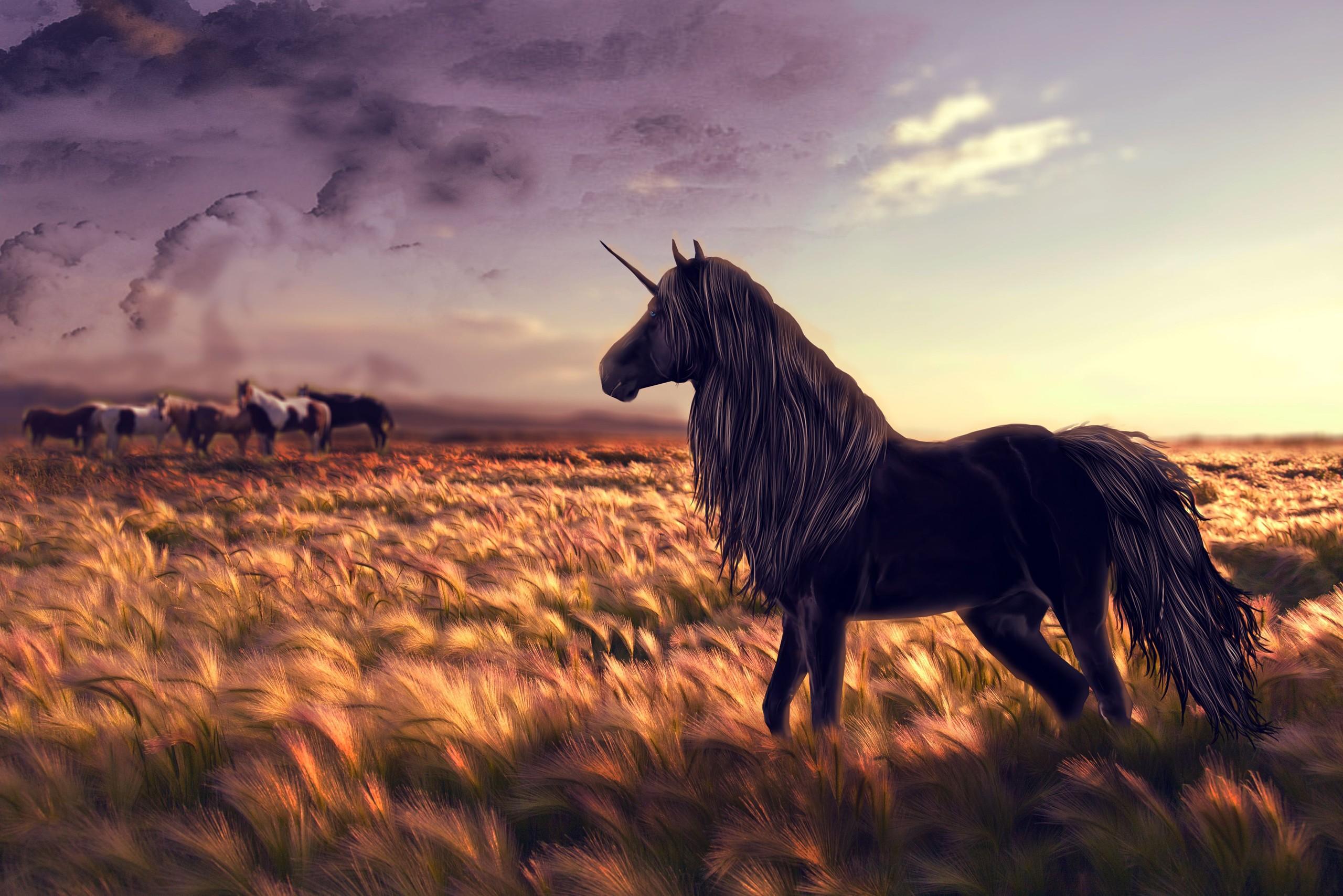 Black Unicorn HD Desktop Wallpaper   New HD Wallpapers 2560x1707