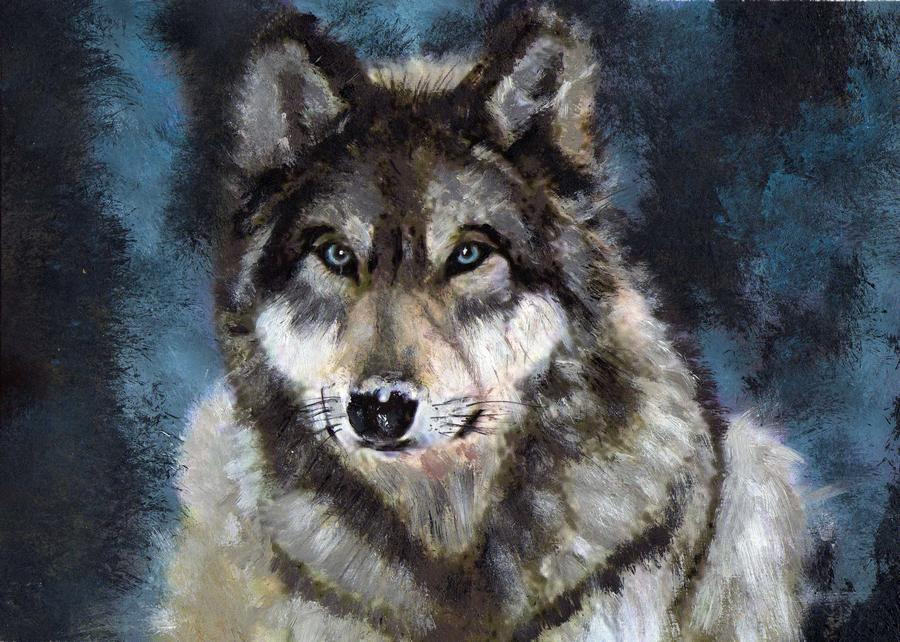 Pictures Of Grey Wolf   Wallpaper HD Base 900x642