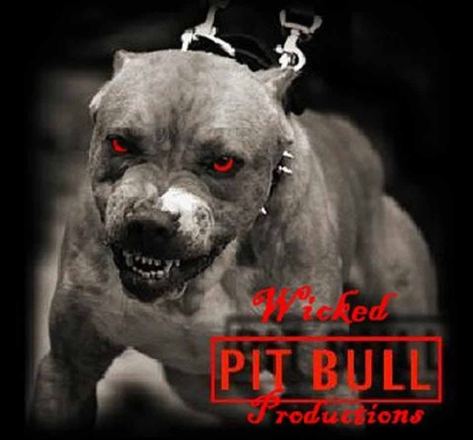 pitbull dog hd wallpapers free download