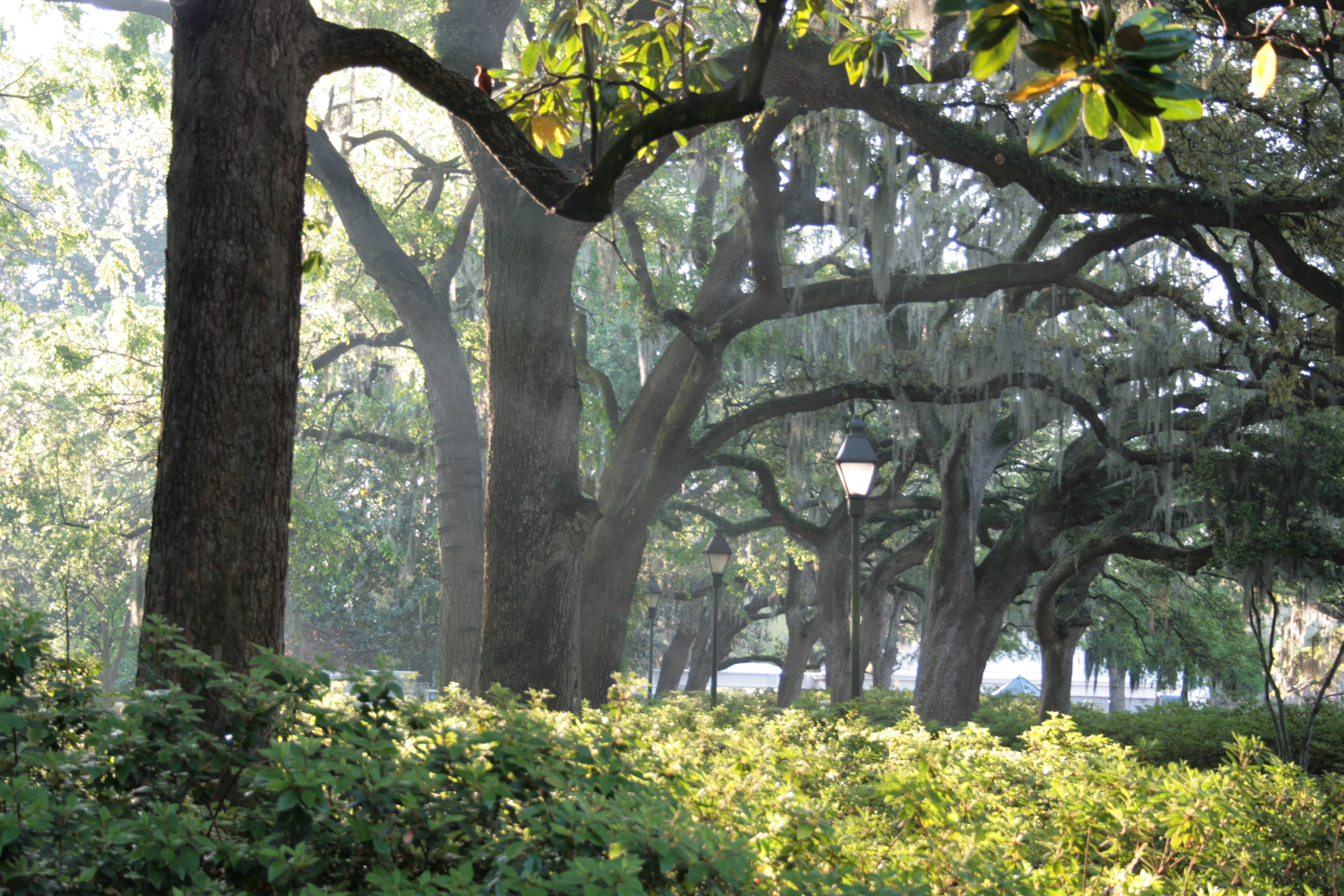 Savannah Images Crazy Gallery 3888x2592