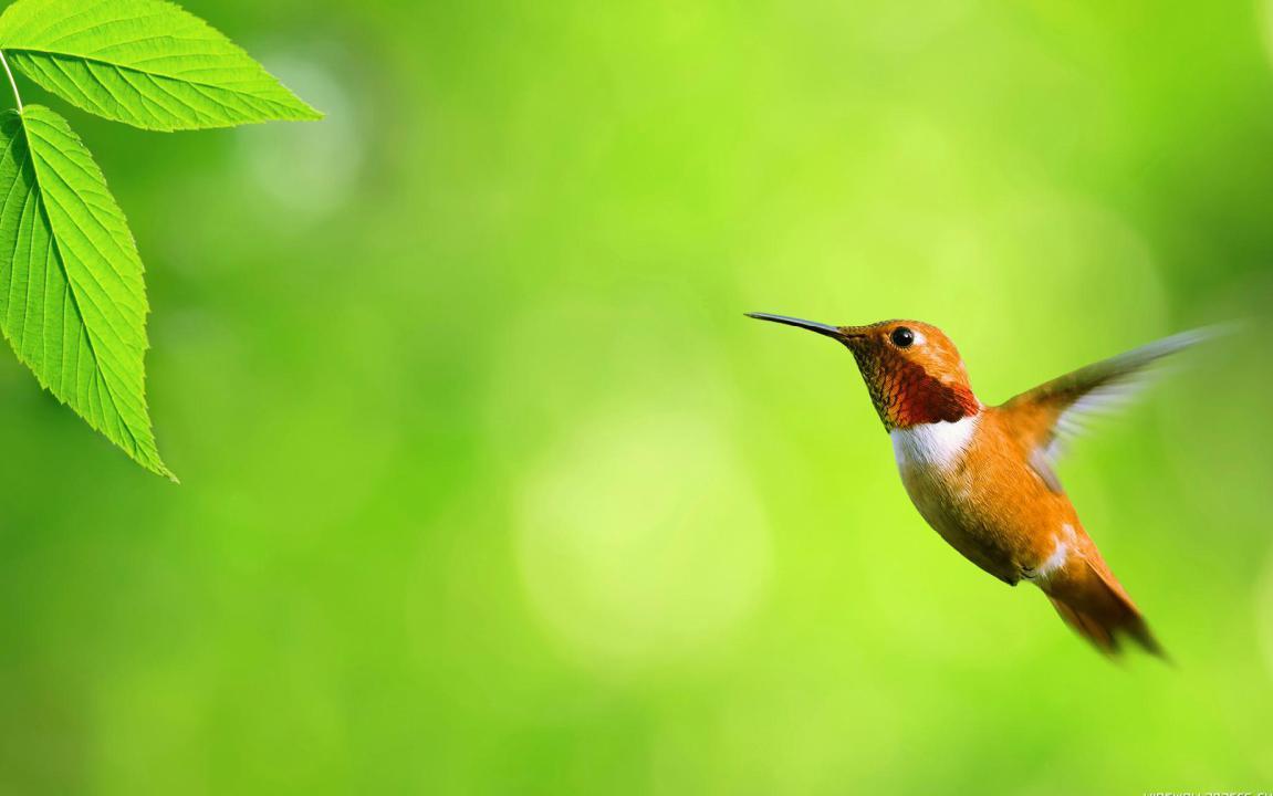 Gambar Wallpaper Burung Lucu HD Desktop DP Wallpaper 1151x720