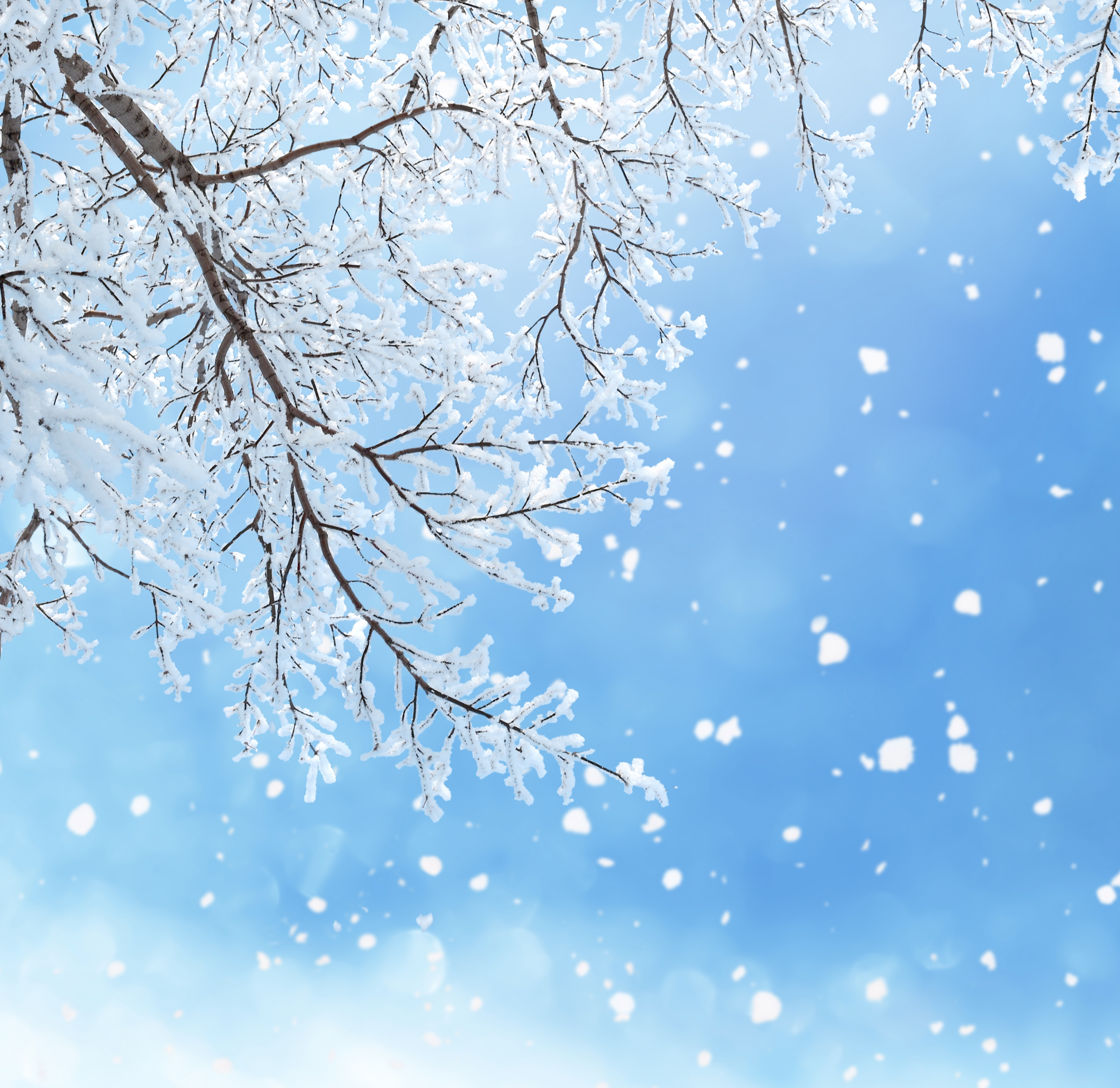 Winter Background with Branches Gallery Yopriceville   High 6550x6366