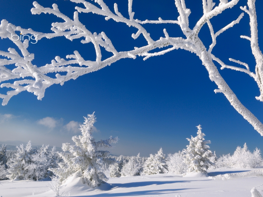 Bing Wallpaper and Screensaver Pack Winter 1024x768
