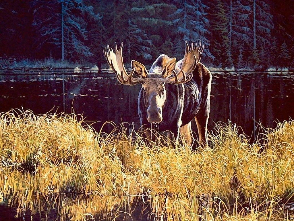 deer wallpaper deer images and animal desktop backgrounds 100 1024x768
