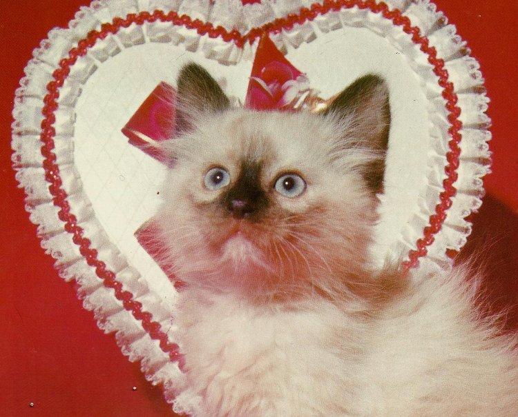 gatito de san valentn fondo de pantalla   ForWallpapercom 750x605