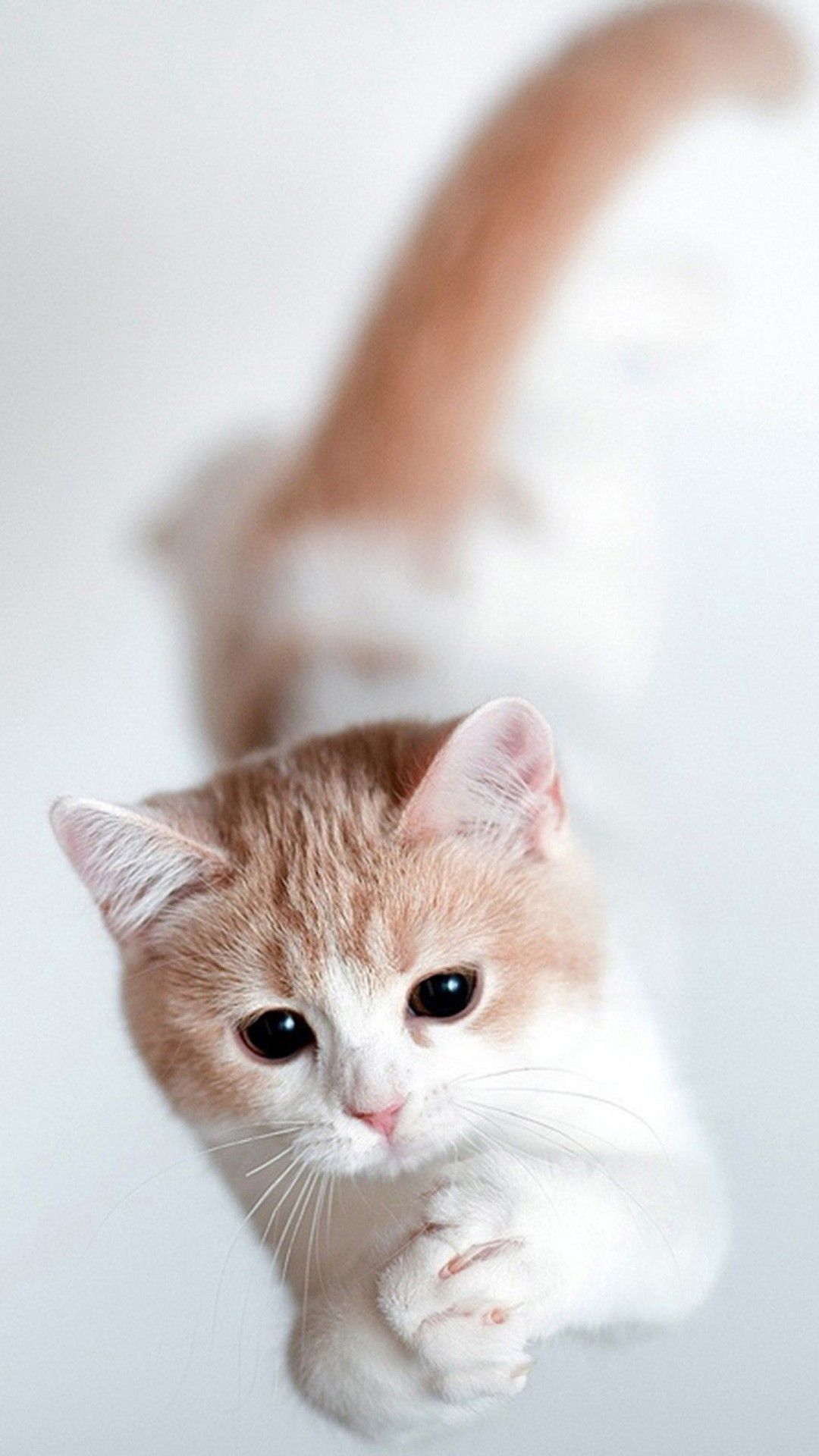 All You Have Ever Wanted To Know About Dogs Cats Cute Cute cat 1080x1920