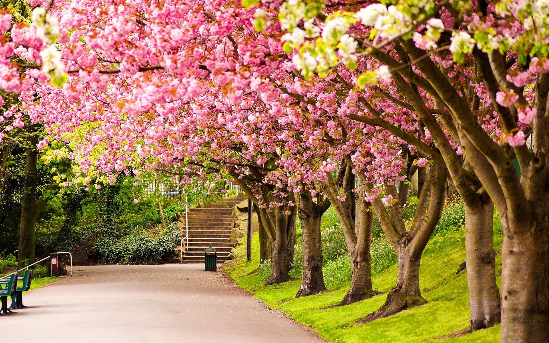Spring Park Wallpapers   Top Spring Park Backgrounds 1920x1200