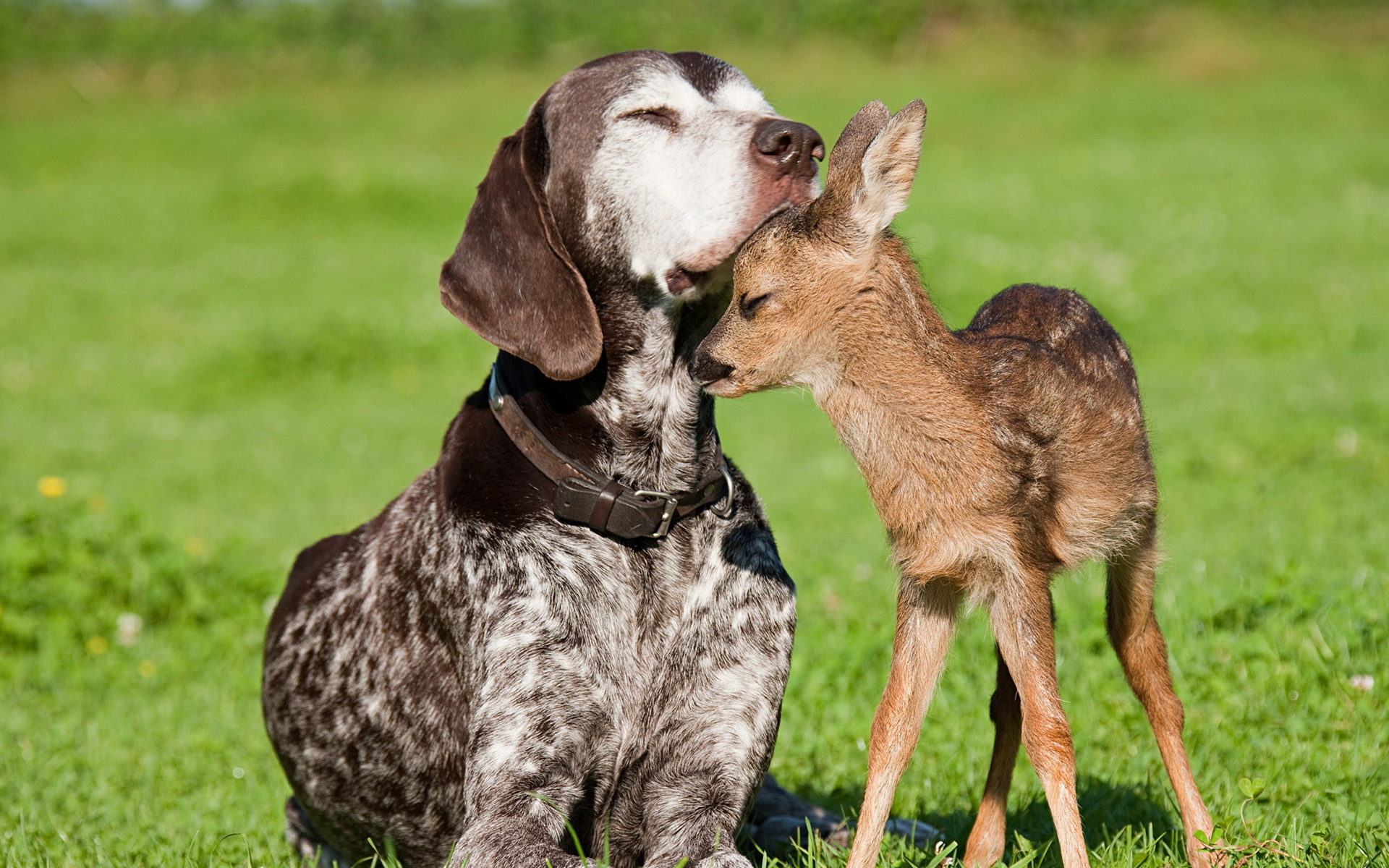 Dog and deer wallpapers and images   wallpapers pictures photos 1920x1200