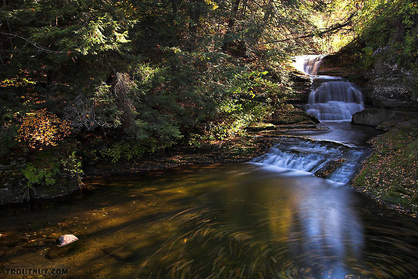 Beautiful trout stream river pictures 816x544