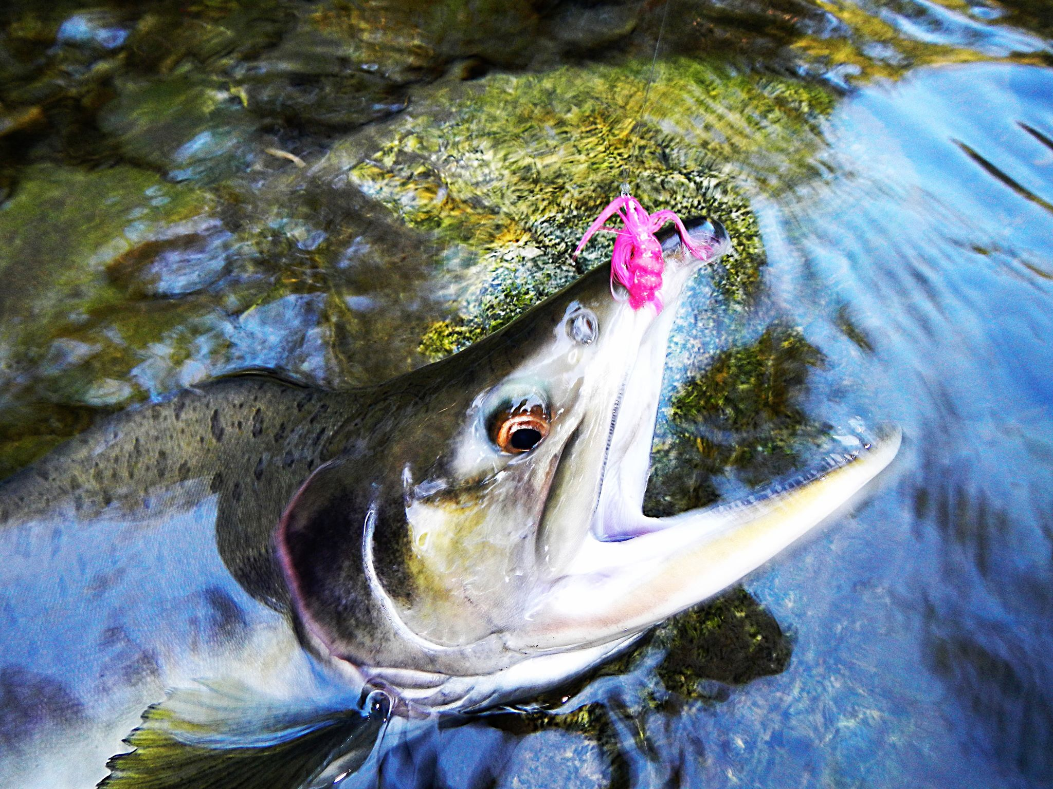 Tenkara simple fly fishing method from Japan uses only a 2048x1536