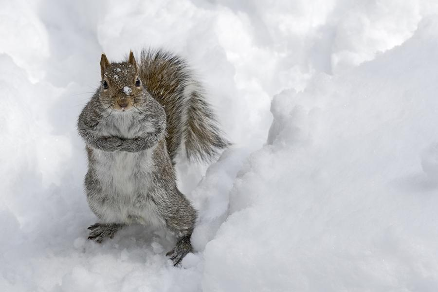 Funny and Wild Animals Funny Animals in the Snow 900x600