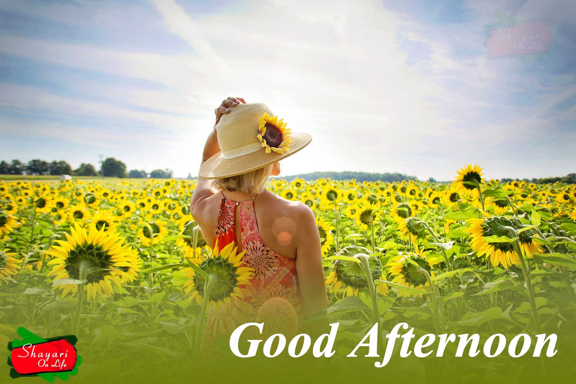 Good Afternoon QuotesWishesMessage With ImagesPhotos 999 New 1920x1280