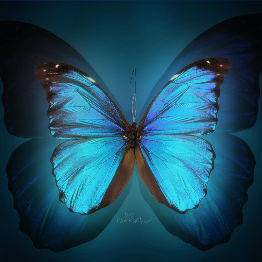 Butterfly Desktop Wallpaper Mobile 1024x1024