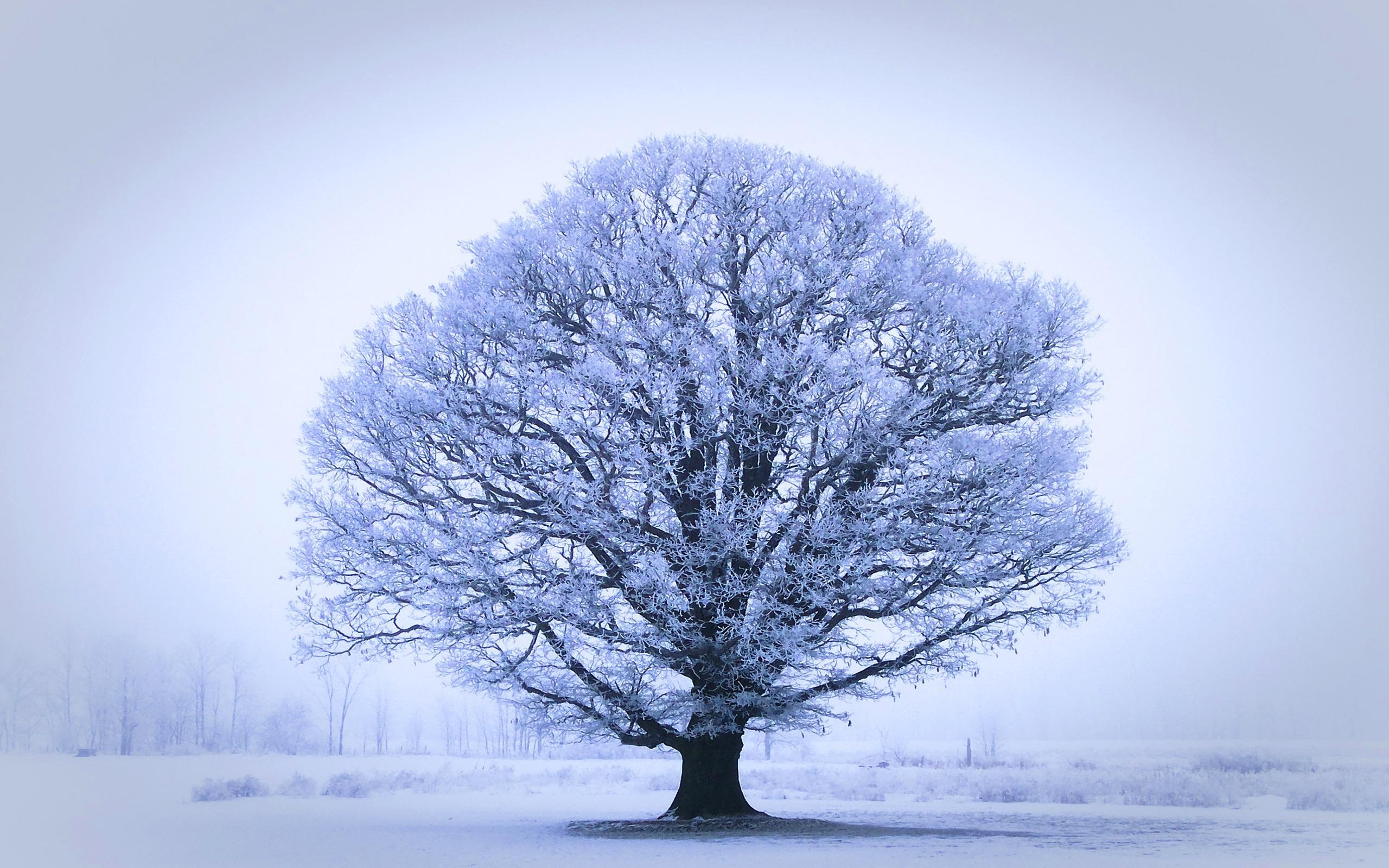 17 Wonderful HD Oak Tree Wallpapers   HDWallSourcecom 2560x1600