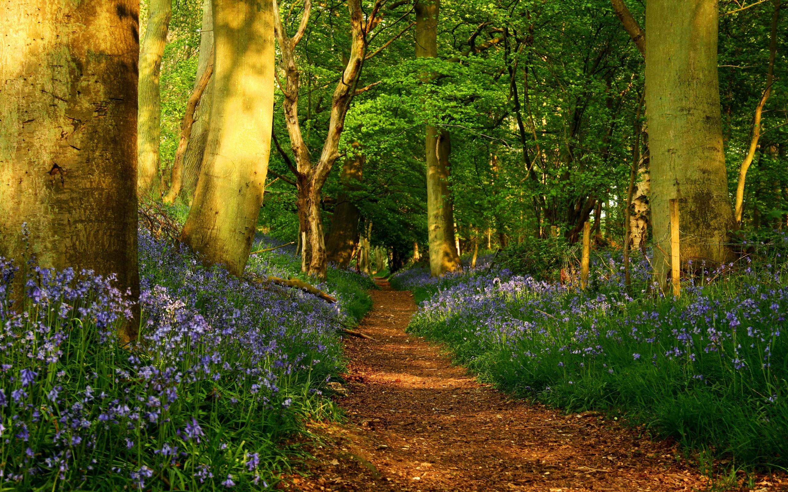 spring forest desktop wallpaper