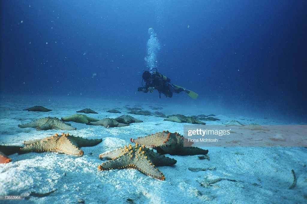 Starfish On Seabed With Scuba Diver In Background Stock Photo 1024x681