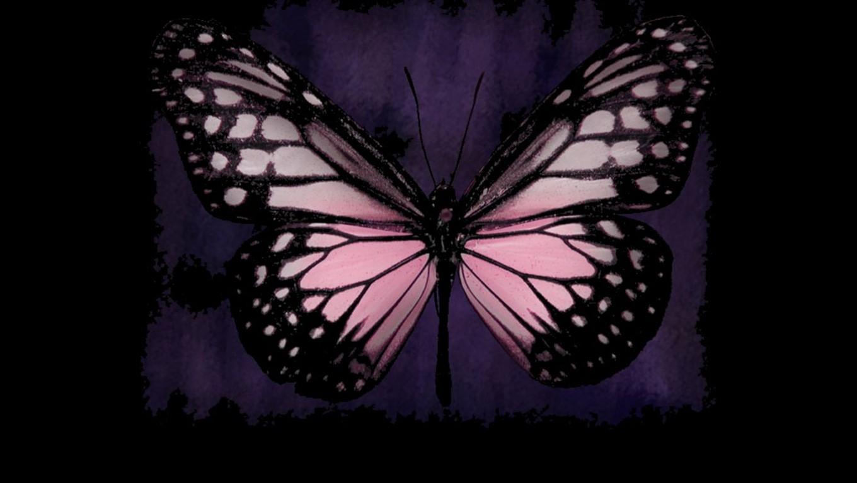 hd cute pink butterfly - photo #30