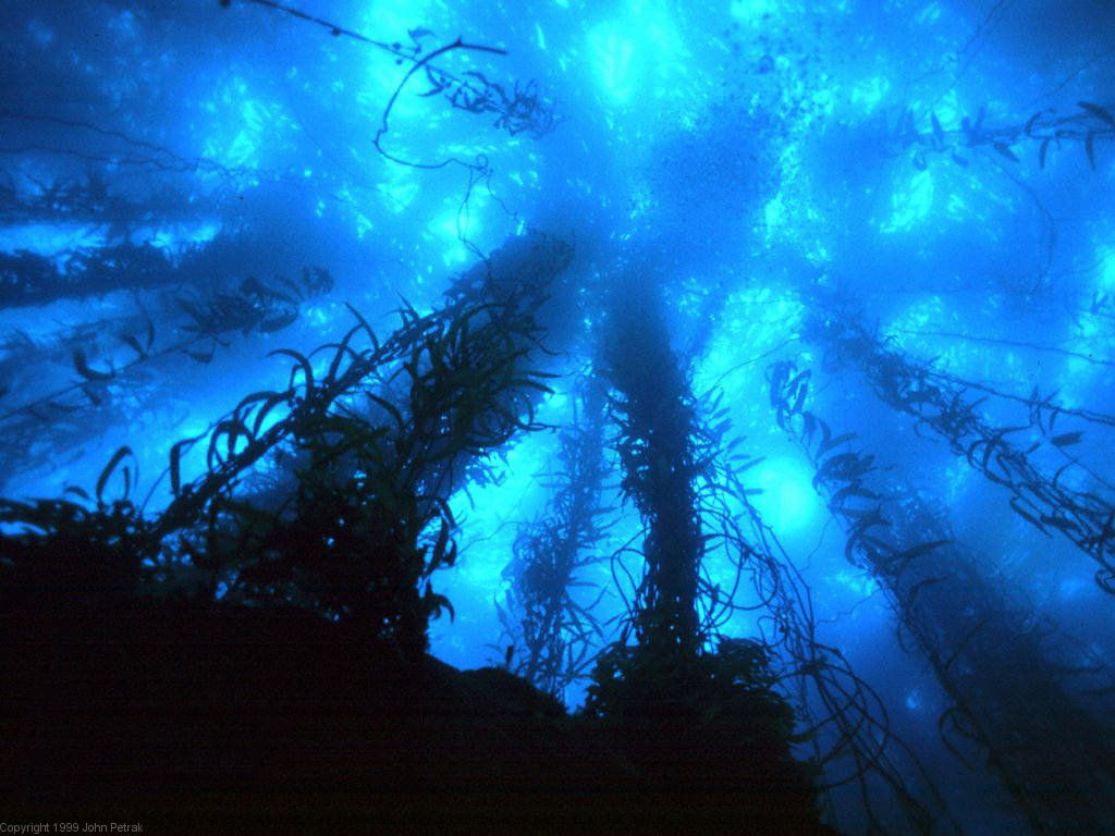 The Archaeology News Network Deep oceans can mask global warming for 1024x768