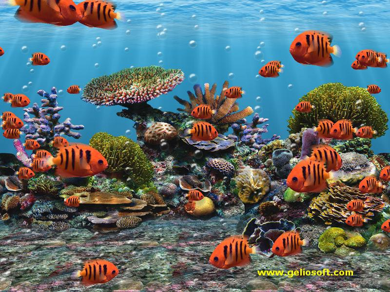 Moving Fish Wallpapers Free 3D Fish Tank Wall...
