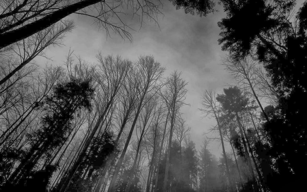 black and white forest wallpaper wallpapersafari