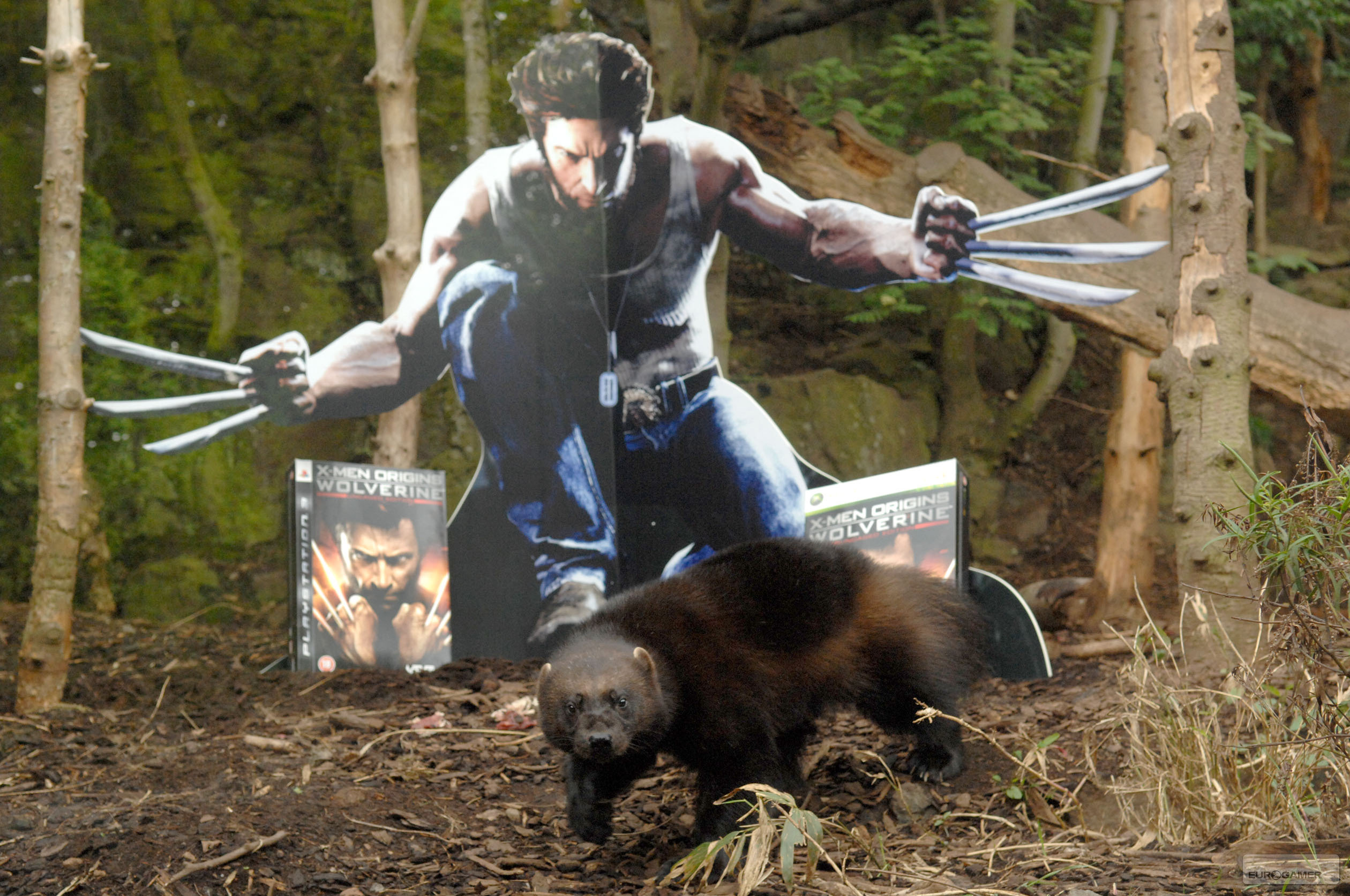 Men Origins Wolverine video game wallpapers Wallpaper 1 of 198 2520x1674