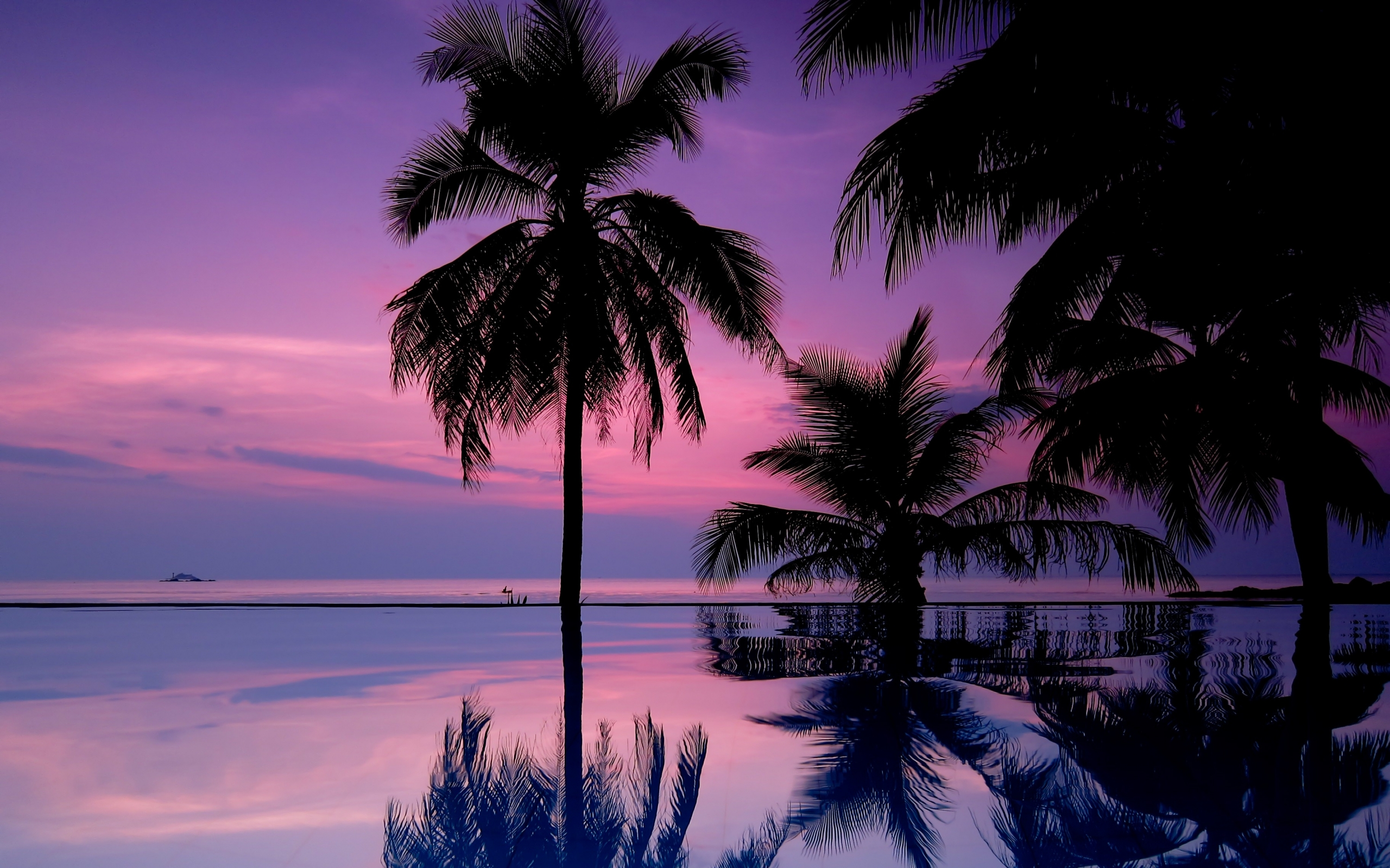 Palm Tree iPhone Wallpaper - WallpaperSafari