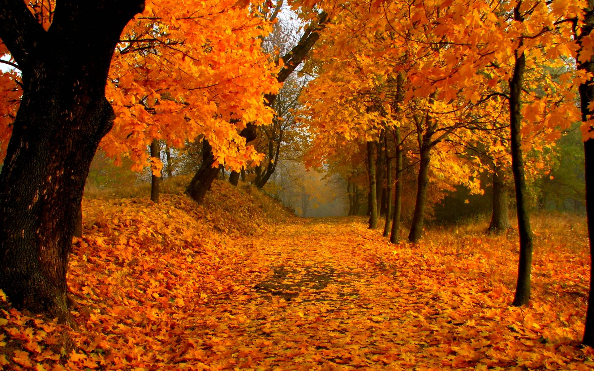 Fall Foliage Wallpapers 1920x1200