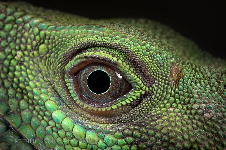 H D Reptiles Reptile HD Wall...