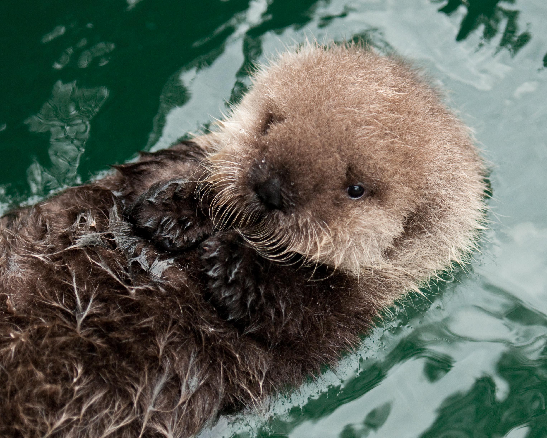 baby otter jpg 3054x2443