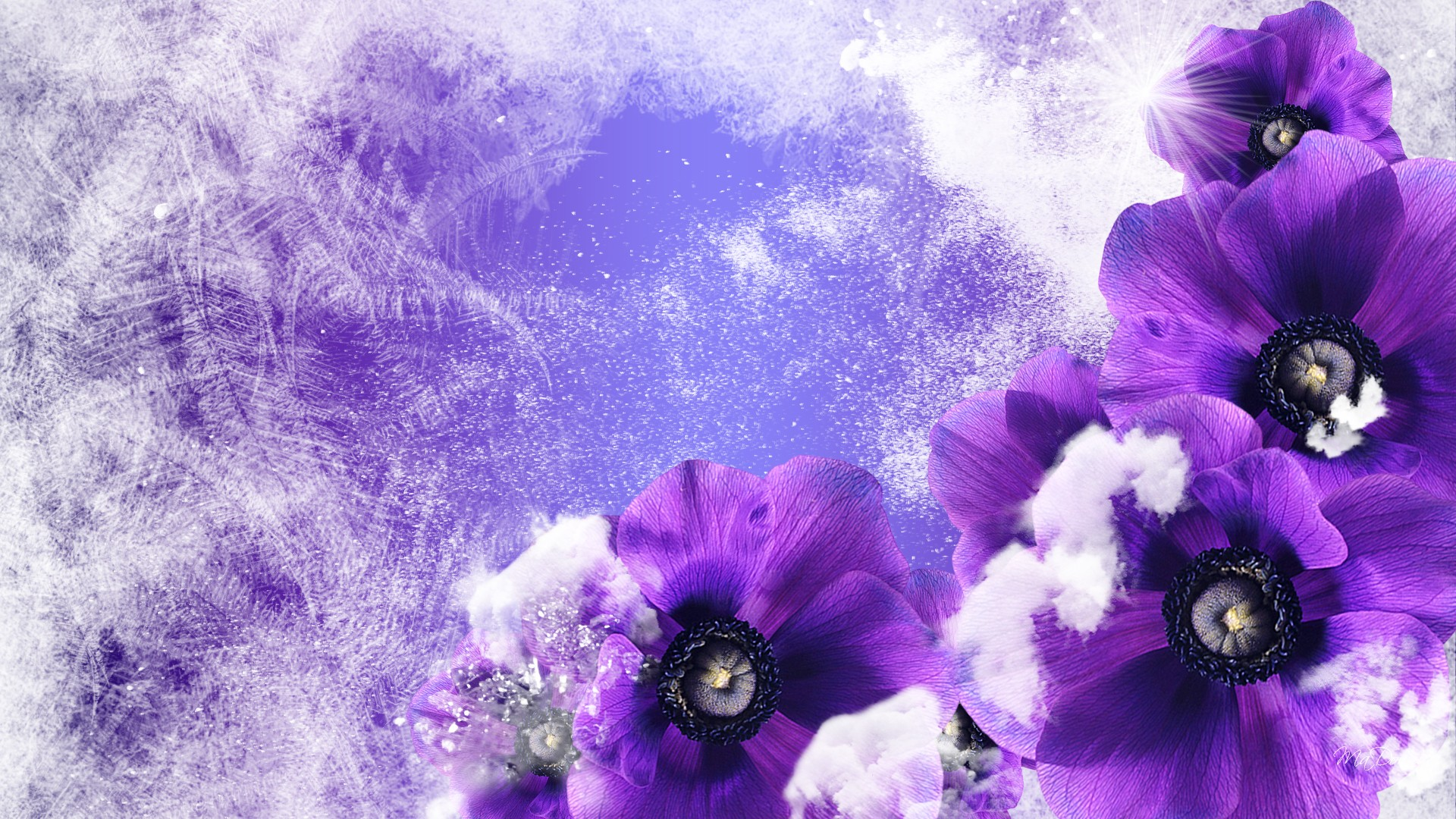 Photo Collection Winter Flowers Wallpaper Backgrounds
