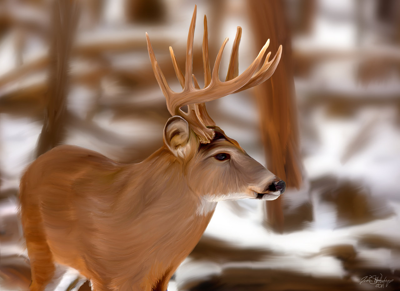 Go Back Images For Whitetail Deer Painting Wallpaper 1280x930