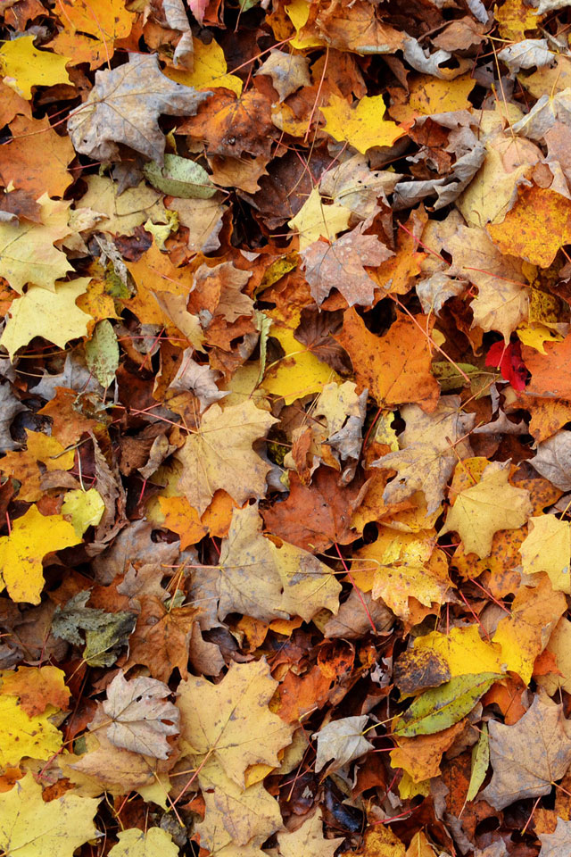 Autumn Leaves iPhone Wallpaper HD 640x960