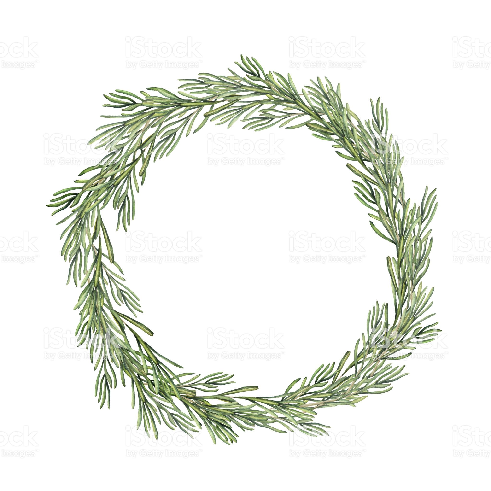 Watercolor Rosemary Wreath Hand Painted Rosemary Branch Isolated 2048x2048