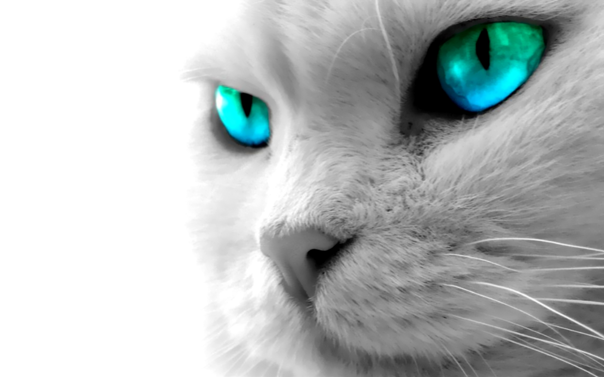 1920x1200px animal wallpaper for desktop background - wallpapersafari
