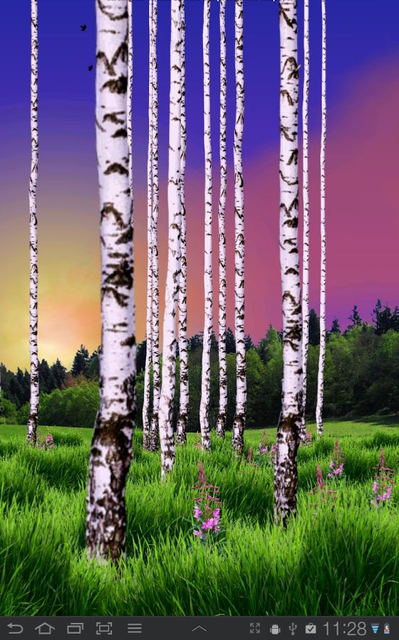 Birch Wood Live Wallpaper   Android Apps on Google Play 562x900