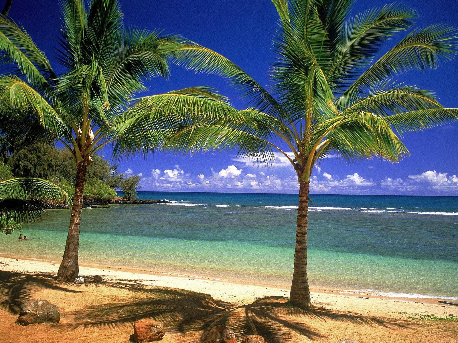 Nice beach background white sand blue water green palm 1600x1200