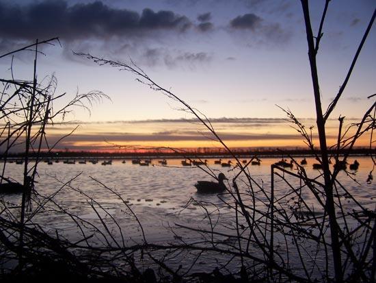 Goose Hunting Wallpaper 2012 waterfowl hunting 550x413