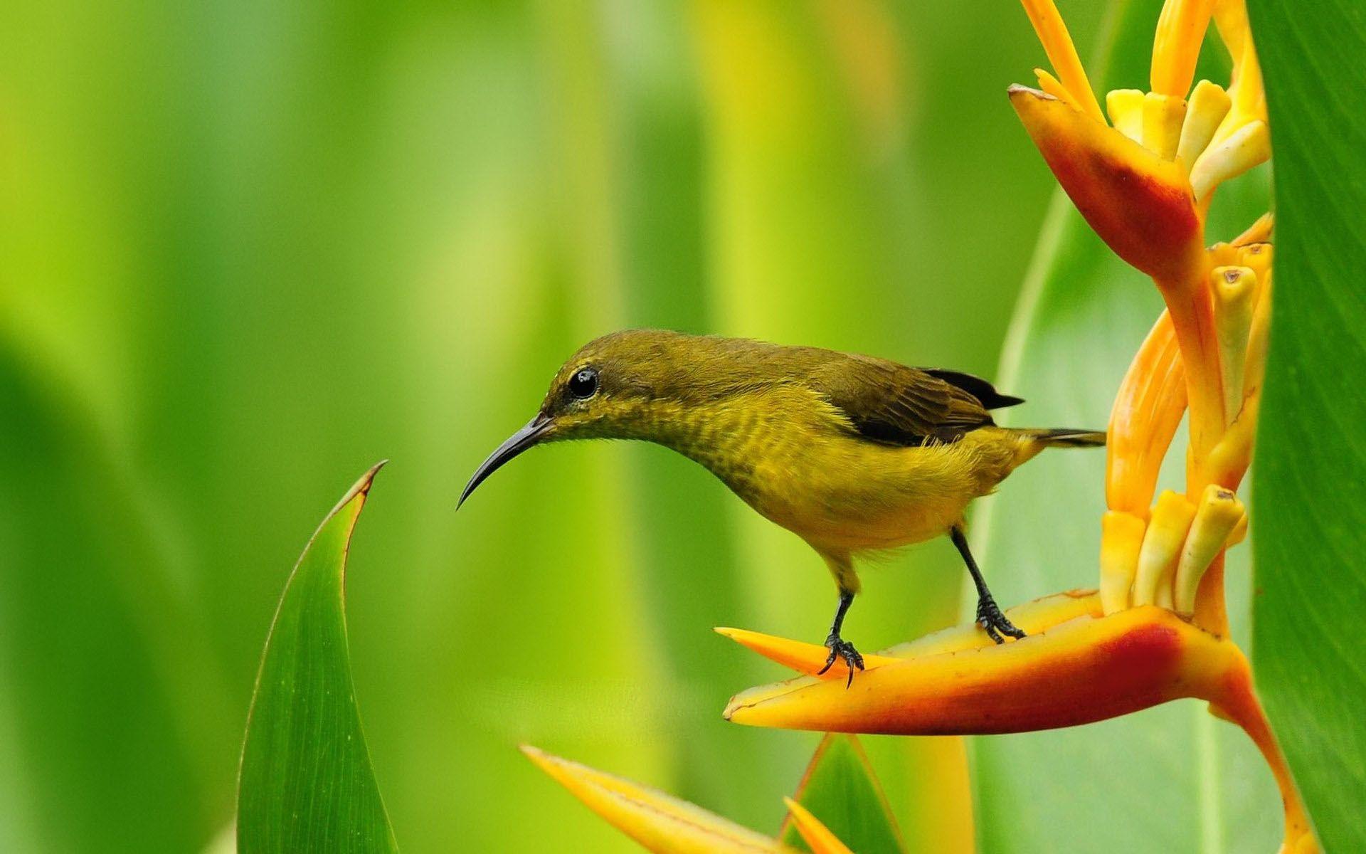 small bird on bird of paradise flower wallpaper   1920x1200jpg 1920x1200