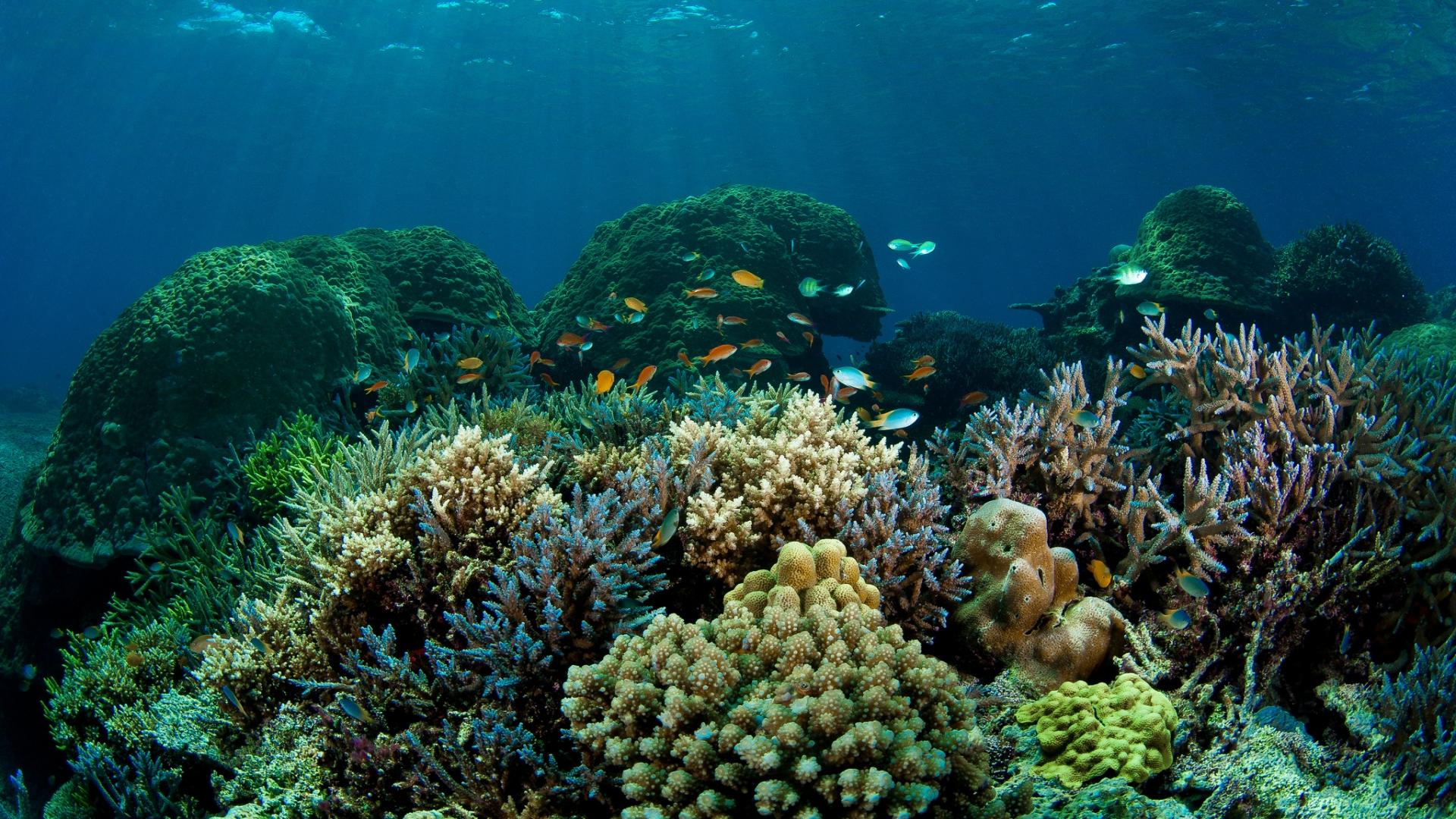 reef coral fish ocean sea water widescreen hd wallpaper Car Pictures 1920x1080