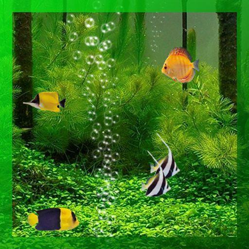 live wallpaper shark backgrounds marine aquarium underwater fish 512x512