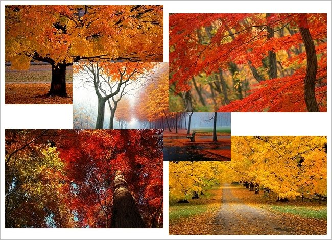 Autumn Desktop Theme 650x470