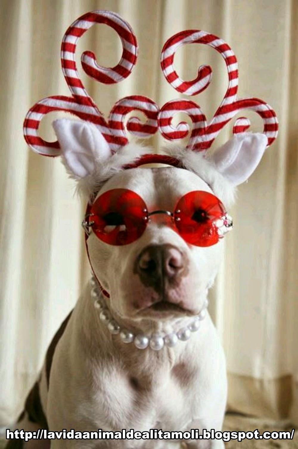 La vida Animal Vestuarios Para Fin de Ao Para tu mascota 1000x1506