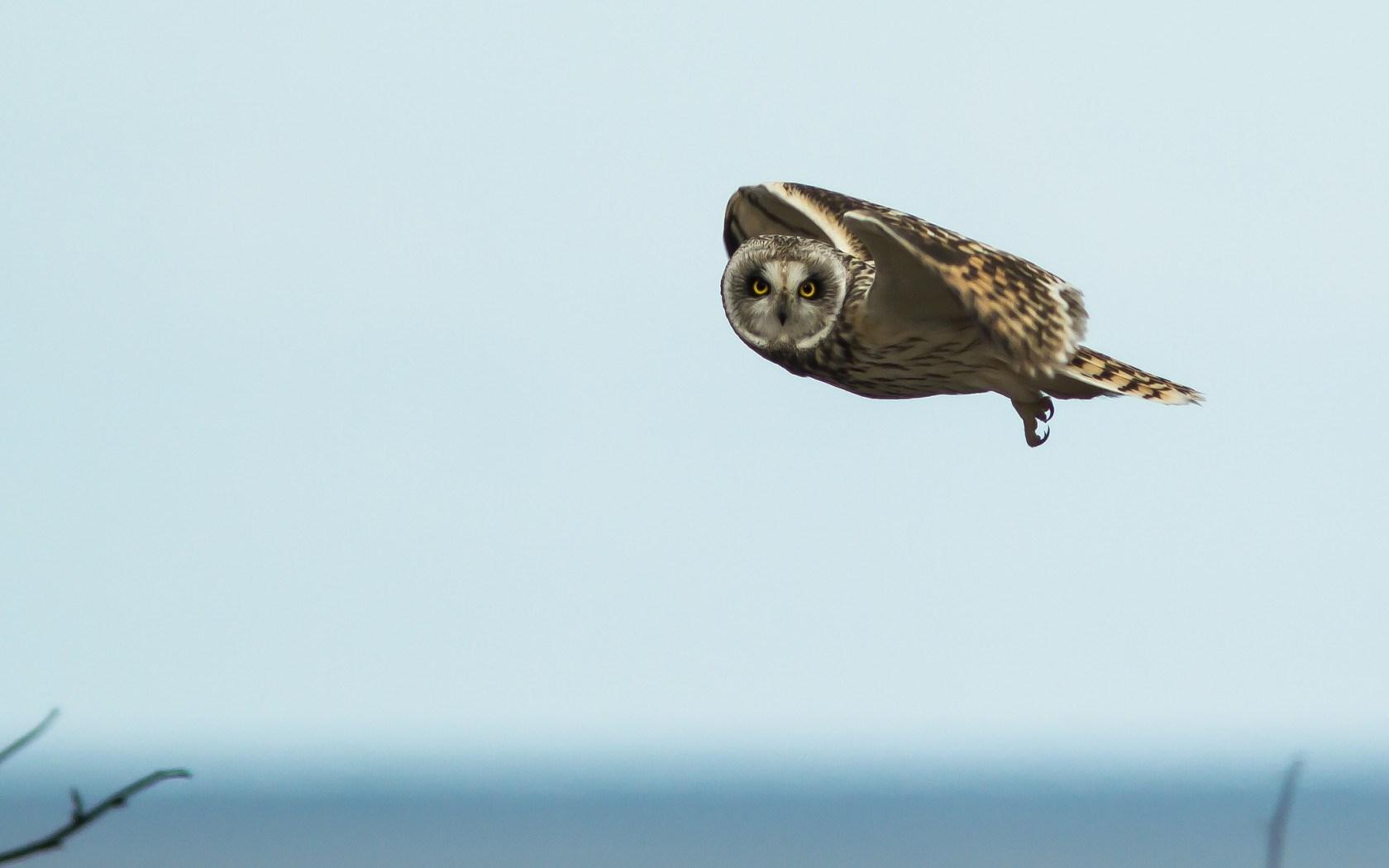 Sky Bird Owl Flying 1680x1050