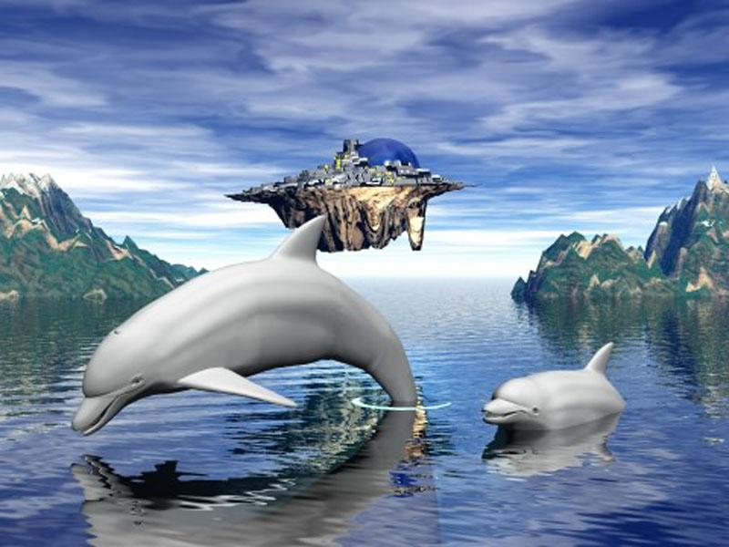 Dolphin Wallpapers Desktop Wallpapers 800x600