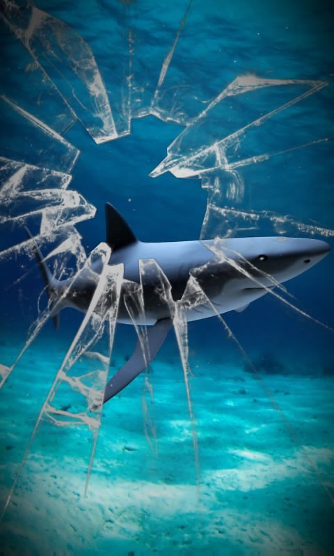 live shark wallpaper - photo #13