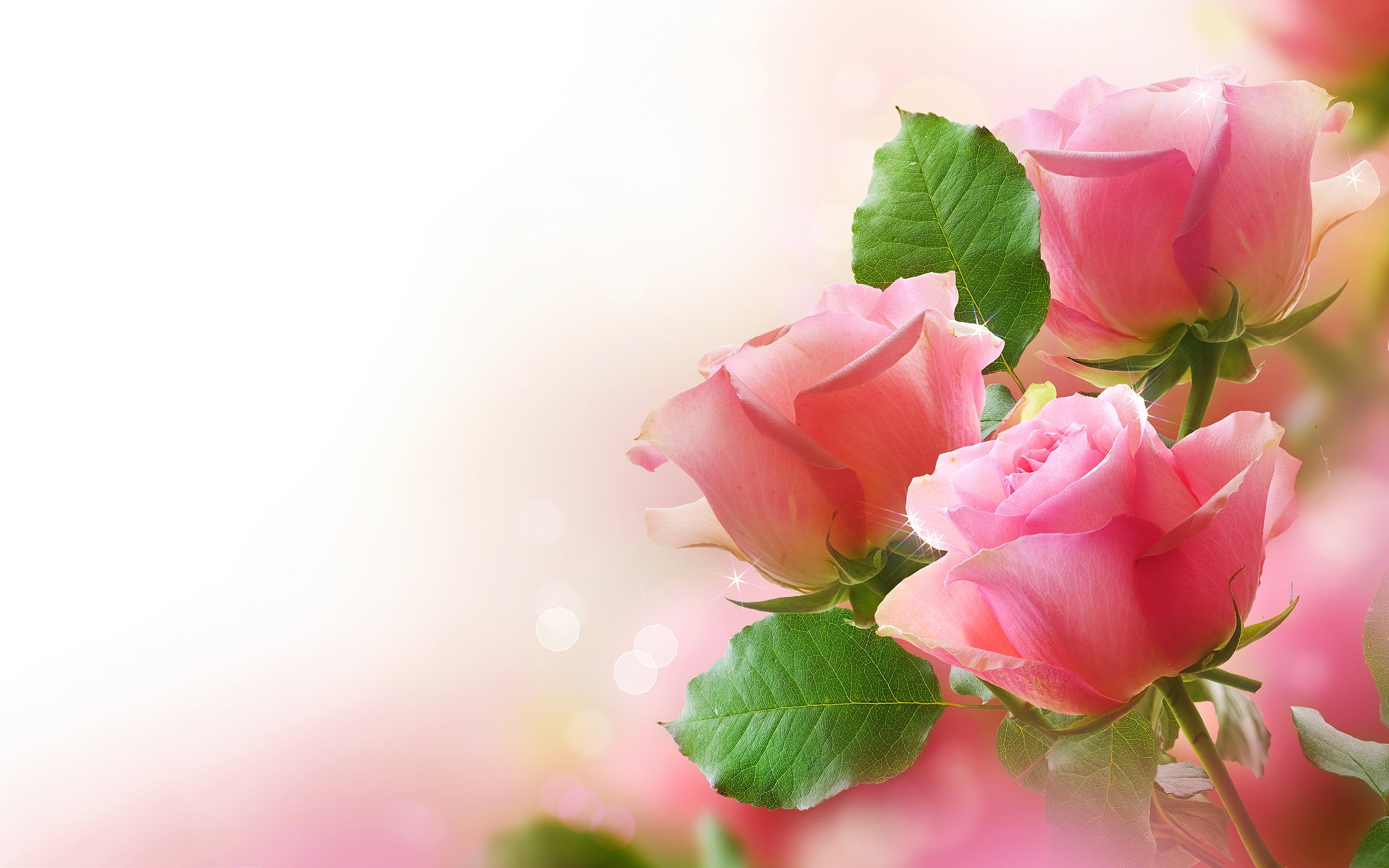 Pretty Pink Roses   Roses Wallpaper 34610943 2880x1800